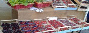 Festa del Raccolto @ Azienda Agricola il Gelso